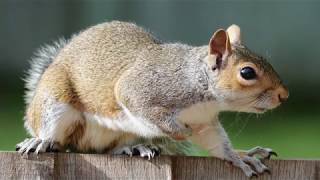 Louisville Wildlife Removal